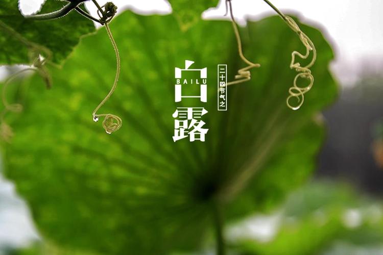 长城拍客第四十六期:白露凋花花不残,凉风吹叶叶初乾
