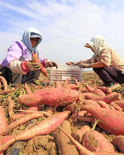 滦南:发展特色农业促增收