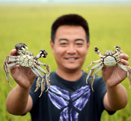 河北曹妃甸:虾蟹丰收