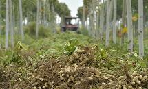 邢台:花生订单种植助农家致富
