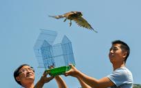放飞救助的野生鸟类