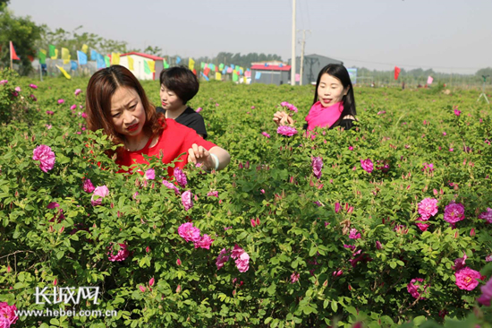河北广宗:要建亚洲最大玫瑰主题文化产业观光园