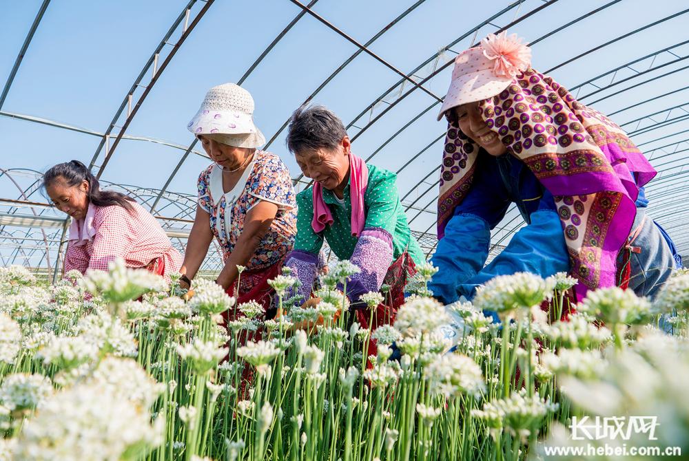 衡水武邑县调整种植结构 拓宽农民增收渠道