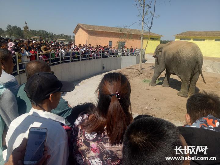 衡水野生动物园今日开园试运营