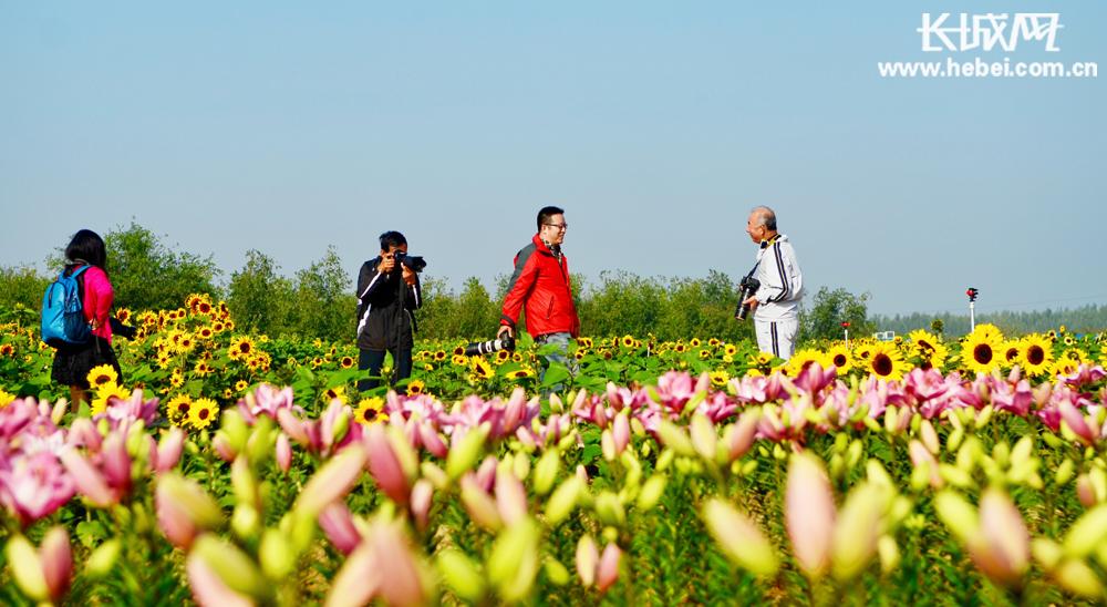 桃城区邓庄镇:鲜花盛开游客来