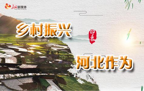 【专题】乡村振兴·河北作为