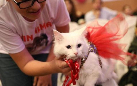 """土耳其:猫咪""""选美"""""""