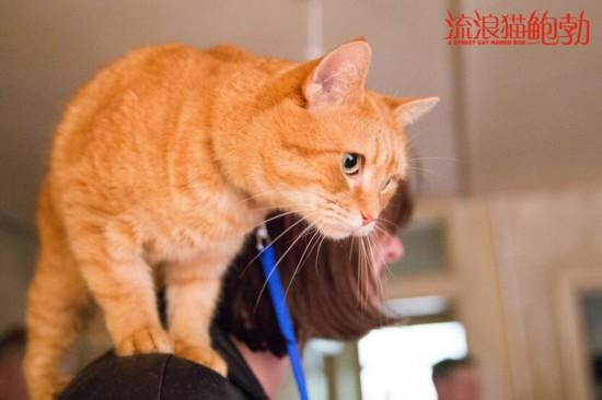 《流浪猫鲍勃》11月2日暖情上映 温馨治愈网友期待满满