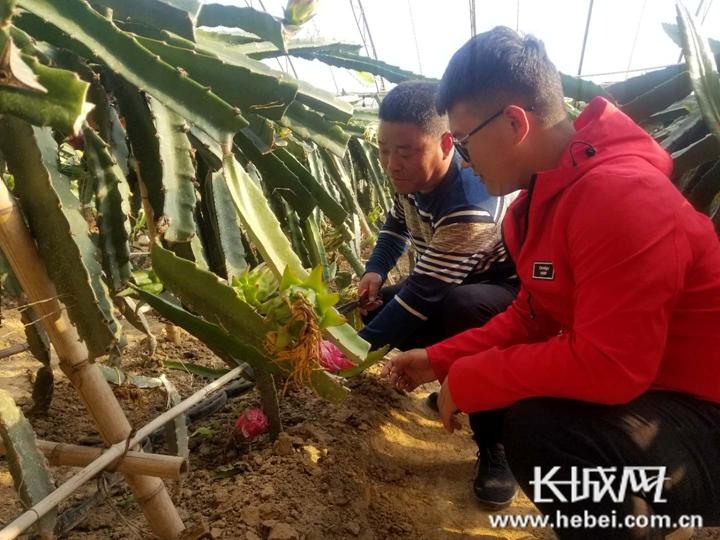 涿鹿:现代农业园区让贫困户稳定脱贫