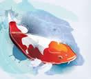全世界都在转发锦鲤 一条鱼是如何成为吉祥物的