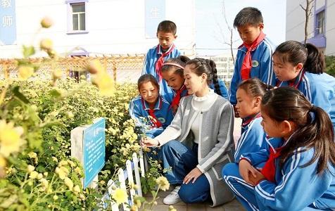 河北内丘:学习体验中医文化