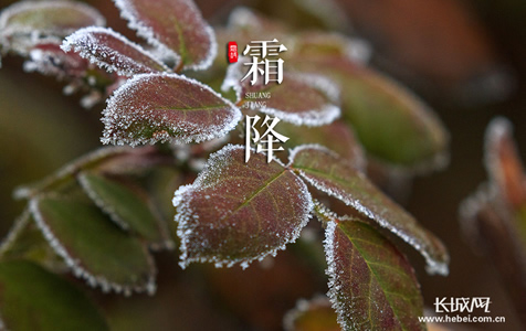 长城拍客第五十六期:一朝秋暮露成霜,几份凝结几份阳