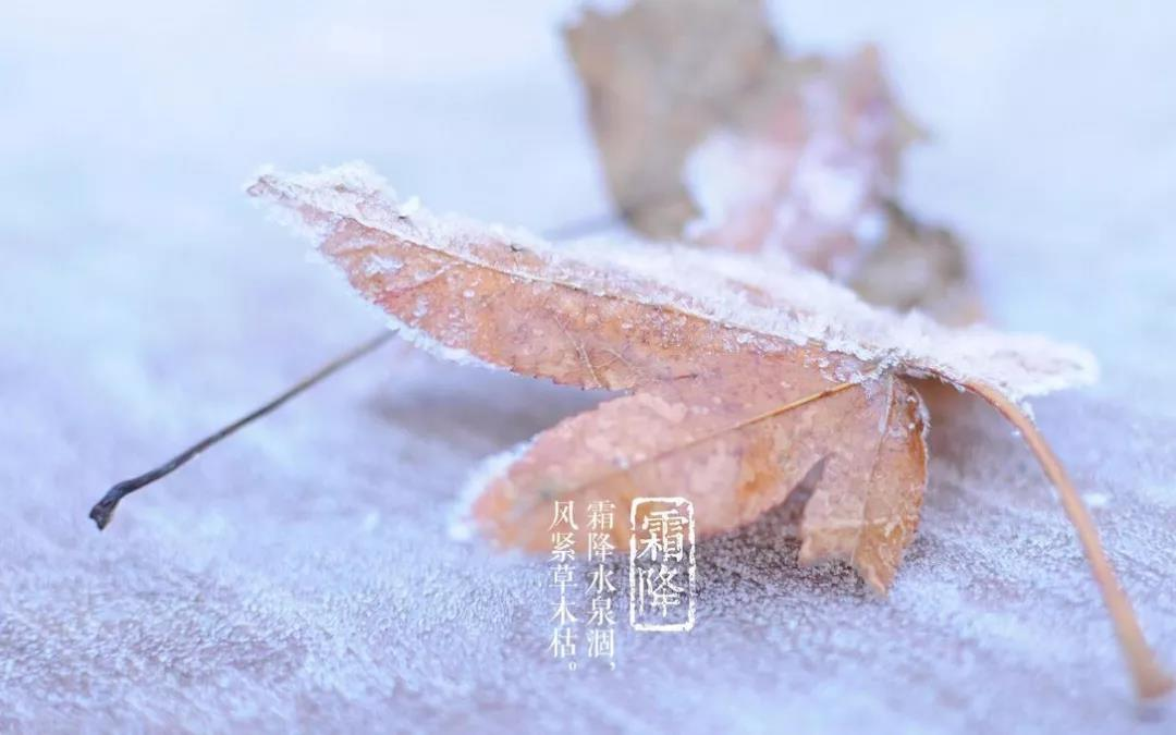 今日霜降丨秋将逝,冬将至,你感受到了吗?