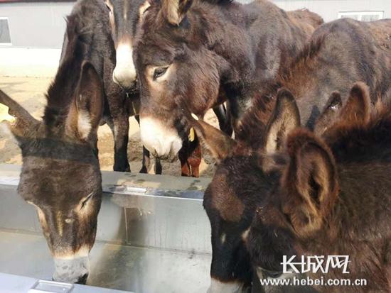 全国驴产业发展座谈会在阳原县成功召开
