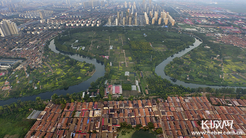 沧州市大运河沿线绿化开展补植补种