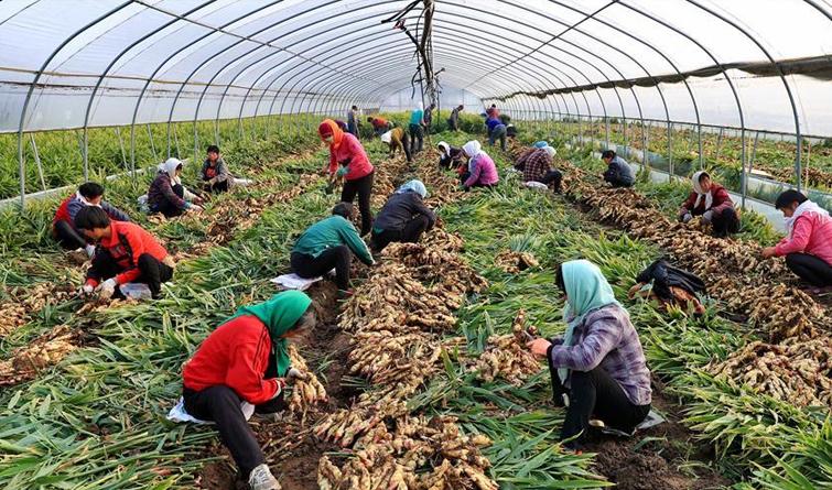 河北唐山:特色种植惠农家