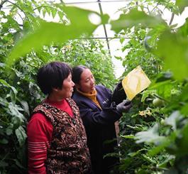 河北乐亭:多措并举筑牢农产品质量安全防线