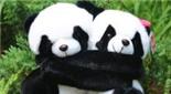 """甘肃 野生大熊猫""""情侣""""同框秀恩爱"""