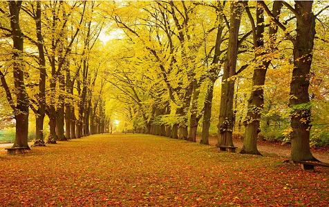 谁说石家庄没有秋天?这里正美得一塌糊涂…