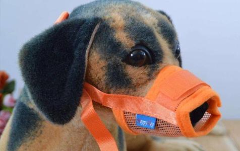 文明养犬,真的就这么难吗?