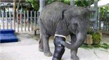 印度首家大象医院开业
