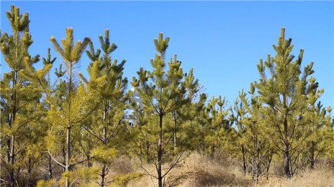 35年植树造林20万亩!人民武警坚守奉献创造生命奇迹