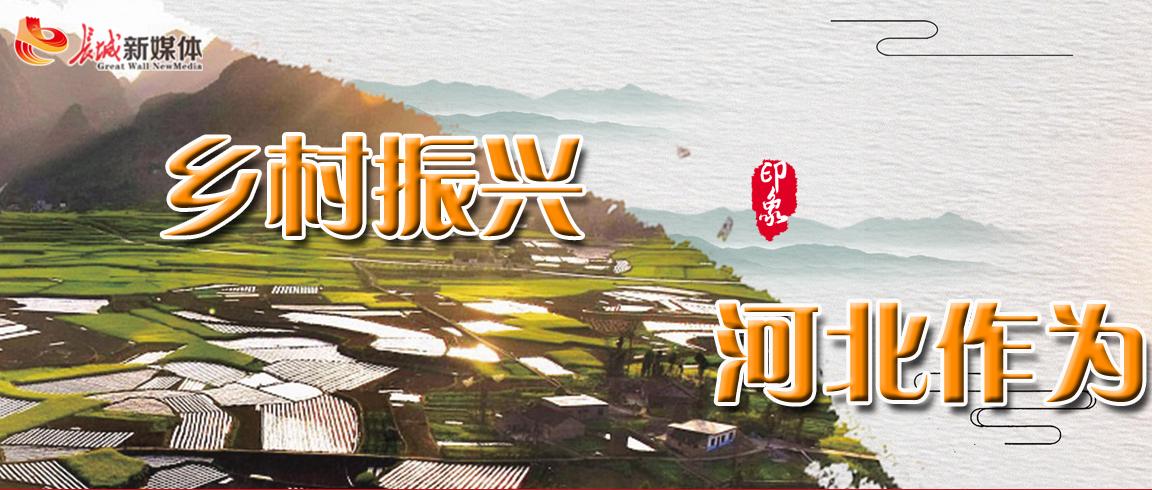 【专题】乡村振兴 河北作为