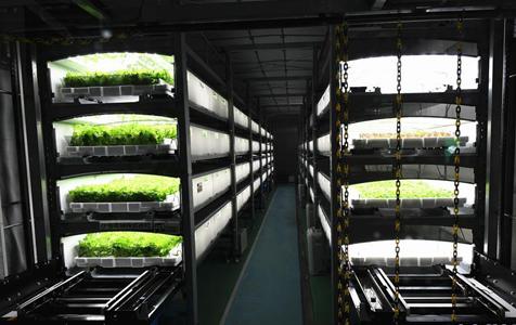 走进世界首个全自动地下植物工厂