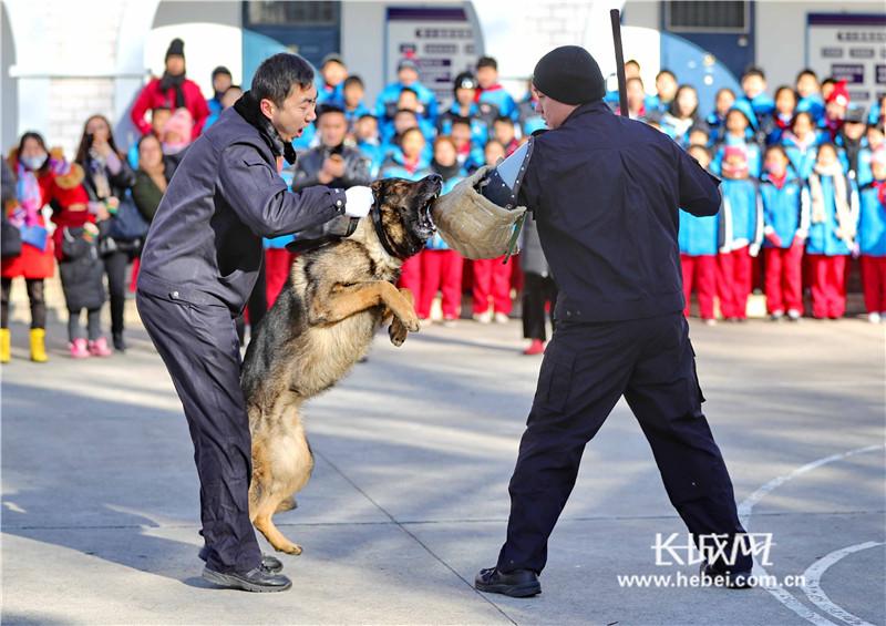 """我和""""汪星人""""有个约会——探秘秦皇岛市公安局警犬基地"""