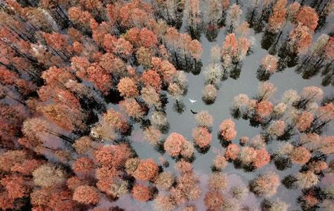 池杉魅影 鸟类天堂