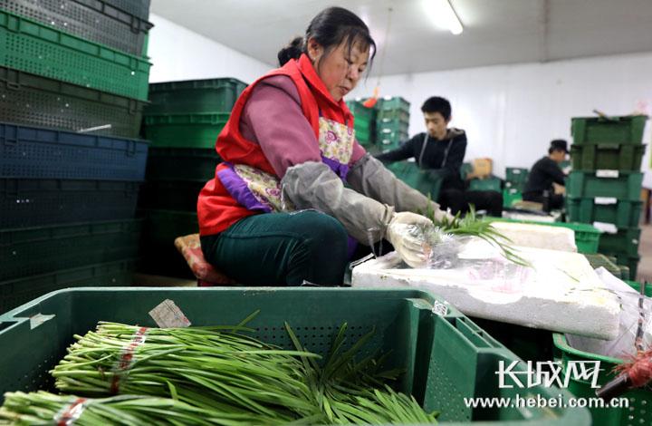 """香河:大力发展现代蔬菜种植业 打造京津冀""""菜篮子"""""""