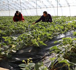 丰润:让农民家门口就业