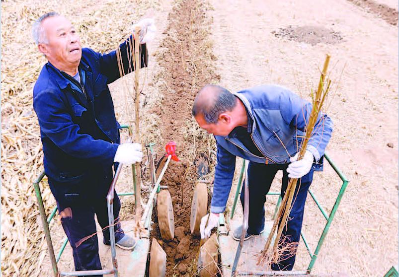 阜城县积极打造绿色乡镇