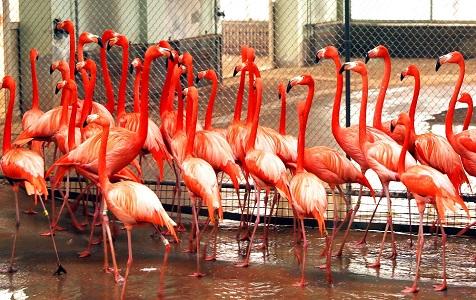石家庄:动物园安置防寒保暖设备 园内温暖如春