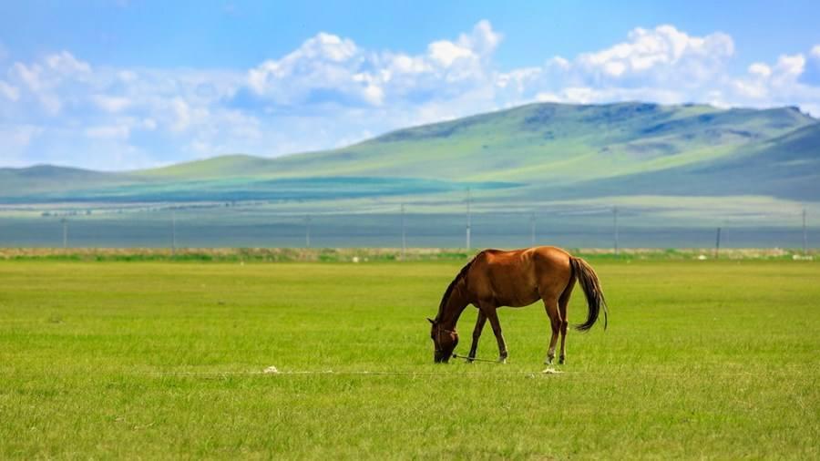 内蒙古马旅游项目正式启动