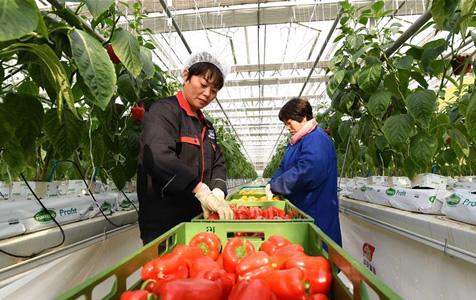 """河北南和:打造现代农业园区 农民变身""""产业工人"""""""