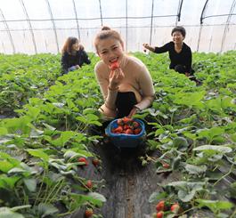 丰润:农民合作社助增收