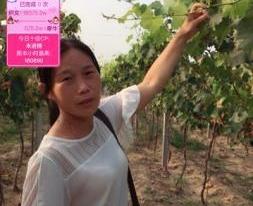 农民做主播带动乡村新活力