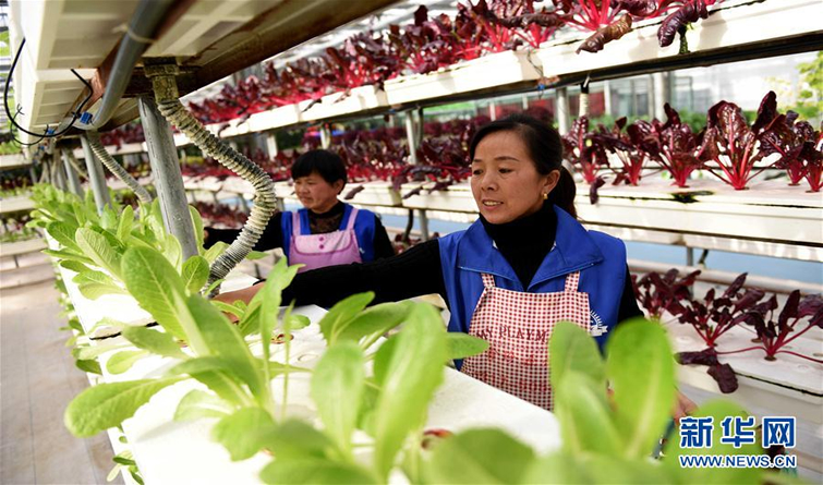 河北南和:现代高效农业助推乡村振兴