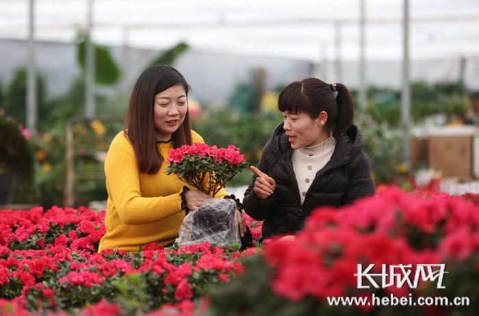 固安:增添喜庆氛围 市民选购鲜花迎