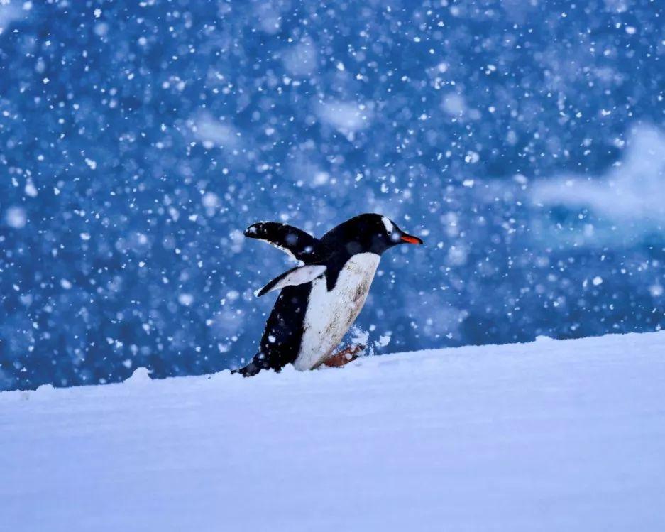 这颗星球上 再没有比南极更特别的土地了