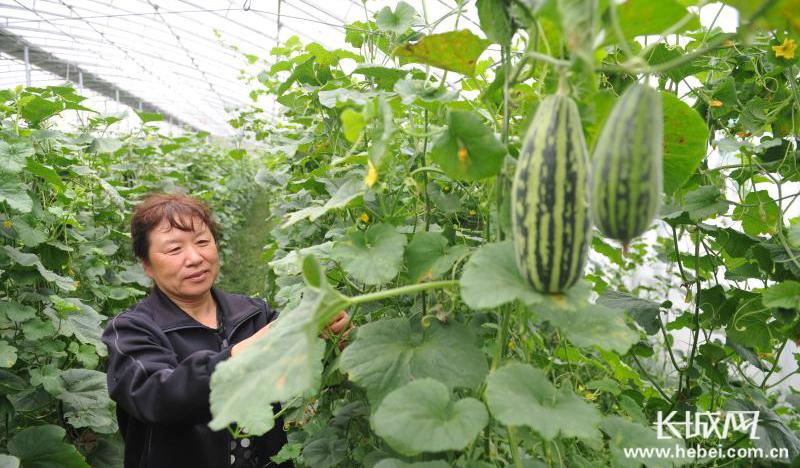 青县政府成省级农业可持续发展试验示范区创建主体