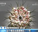 北京 中法手工艺术之花绽放国博