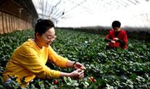 河北廊坊:农旅融合促发展