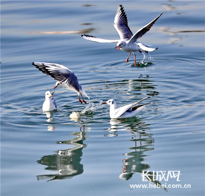 长城网 秦皇岛频道 港城通    随着天气的逐渐变暖,秦皇岛市海港区