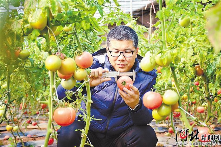 【新春走基层】让优质蔬菜赢在起跑线上