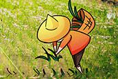 新型職業農民怎么當?看這里!