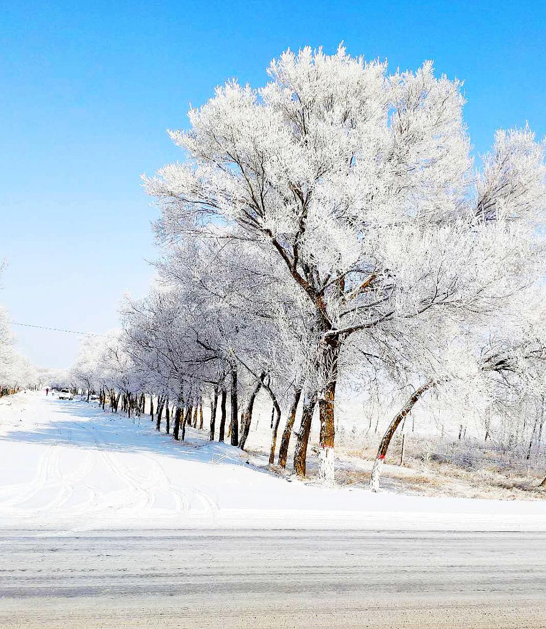 河北张家口:塞外雾淞与雪地相映成趣 现银装素裹美景
