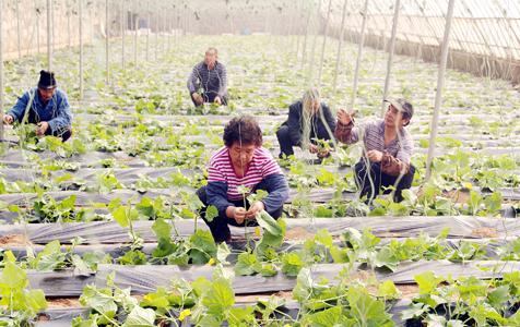 石家庄:农民春季劳作忙