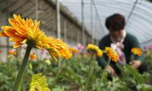 河北唐山:春季劳作忙
